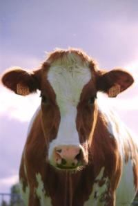 domeennimi ei ole pyha lehm